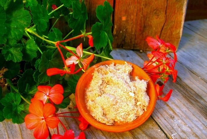 home remedies for heartburn Slippery Elm