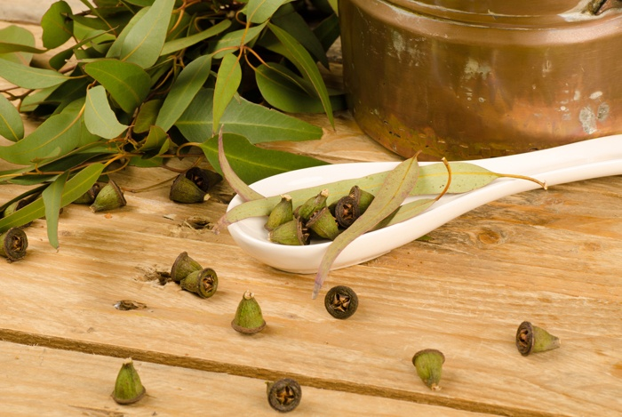 home remedies for hoarseness Eucalyptus Oil
