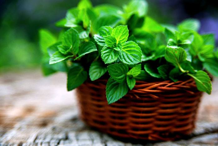 home remedies for pimples Freshen Up With Mint