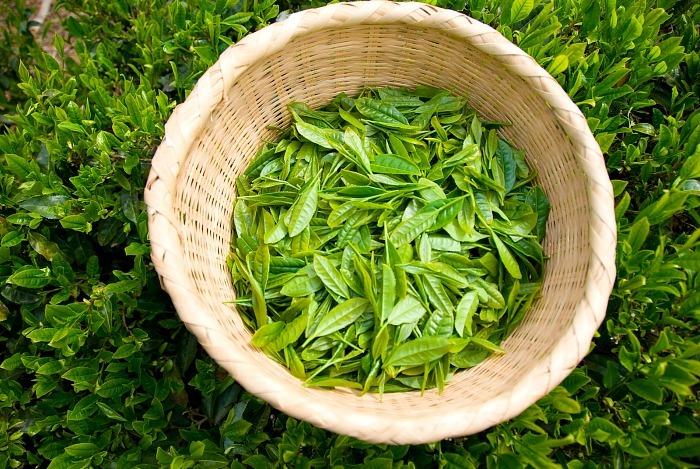 home remedies for shiny hair tea
