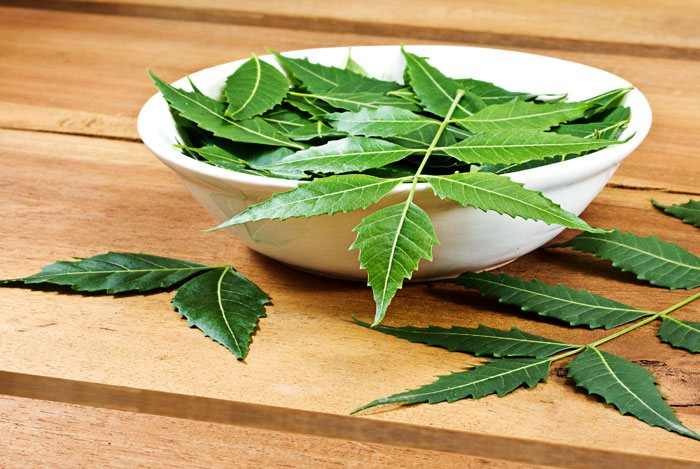 home remedies for dandruff Indian Lilac Or Neem