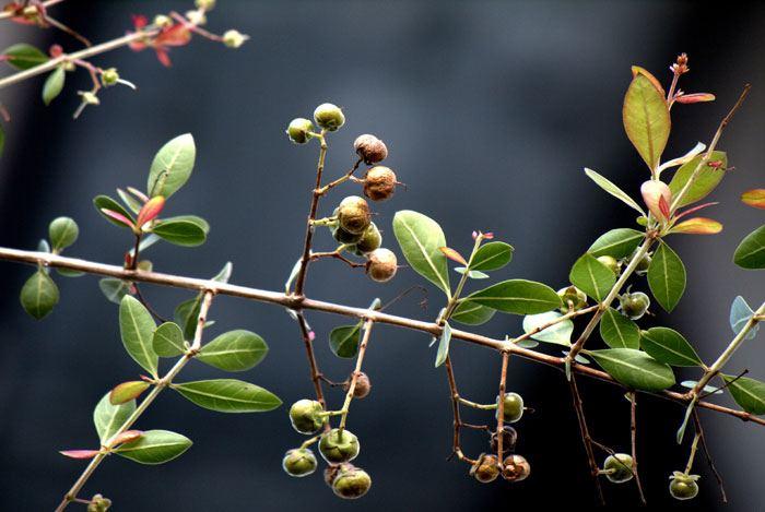 home remedies for dandruff henna