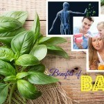 benefits of basil