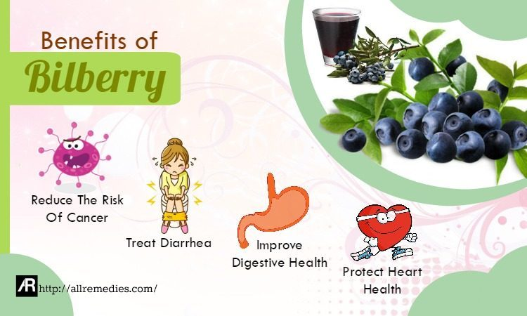 benefits of bilberry