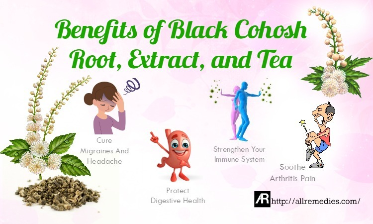 benefits of black cohosh