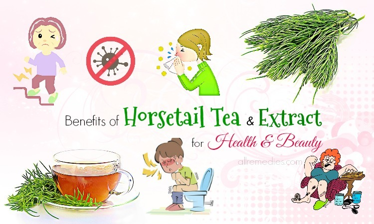 benefits of horsetail
