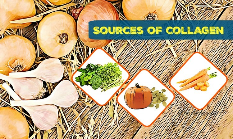 sources of collagen