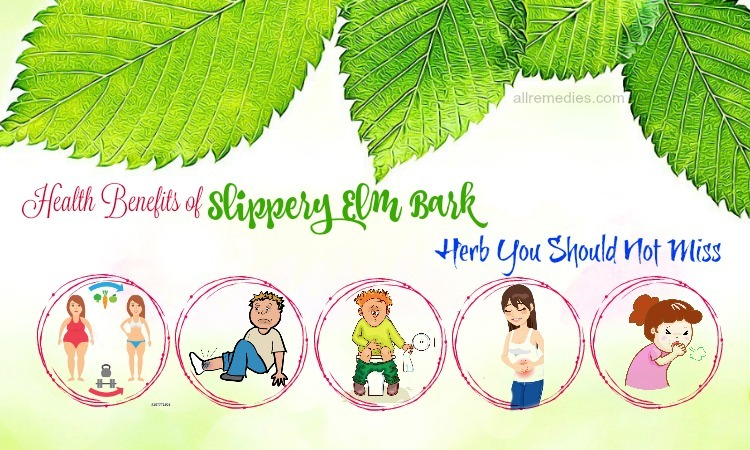 benefits of slippery elm