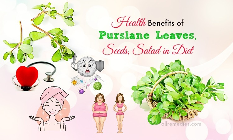 benefits of purslane