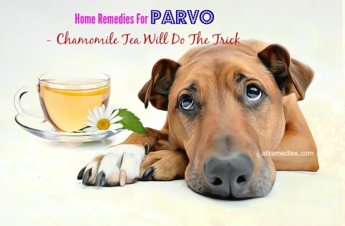 home remedies for parvo disease