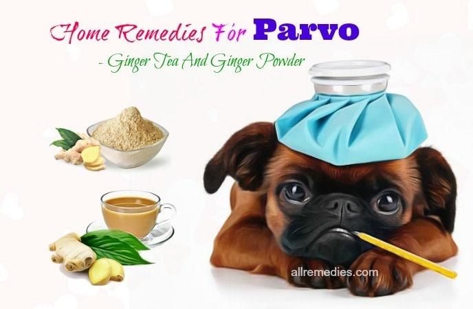 home remedies for parvo symptoms